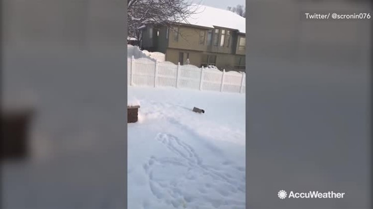 Tiny pug practically swims in snow