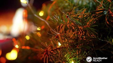 Tips to prevent your Christmas tree from catching fire