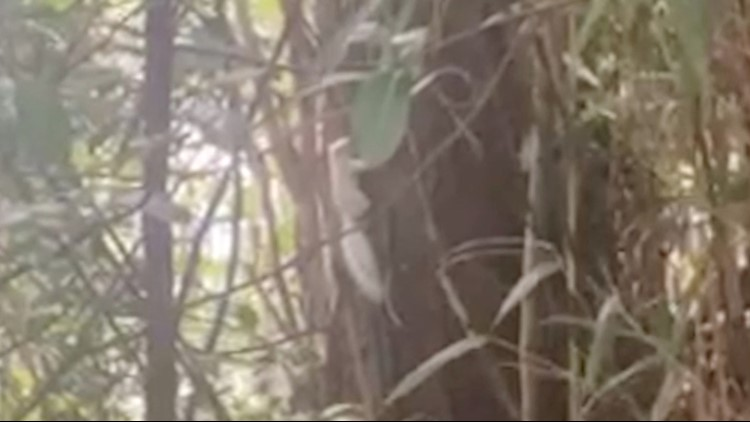 This Rare White Squirrel Was Spotted in a Forest in the U.K.
