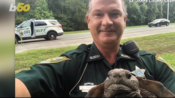 Officer Takes 'Shell-Fie' With Turtle After Reptile Blocks Parkway!