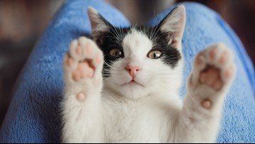 Cat cannibalism: US researchers fed cat, dog remains to lab