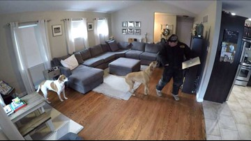 Doggie Burglar Test: Would your dog protect your home?