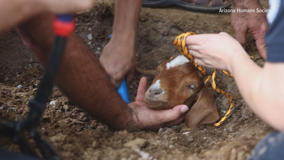 Goat freed from irrigation pipe in Phoenix after two-day, six-hour rescue