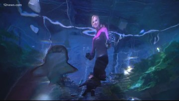 Everywhere A to Z: Behind the scenes of Sea Life Aquarium