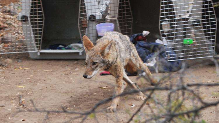 Faces of the Southwest Wildlife Conservation Center