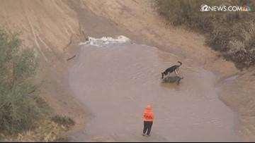 Sky 12 captures some pups loving the rain in Desert Hills