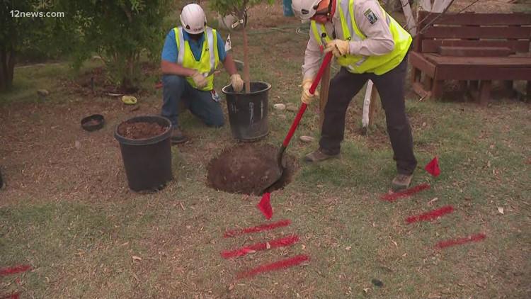 Arizona utility sharing tips on safely planting trees