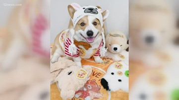 Good news: Professor Colton is in recovery and adoptable puppies at the Arizona Humane Society