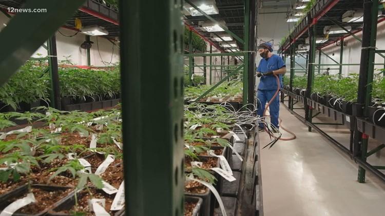 Is 'cannabis' Arizona's sixth C?