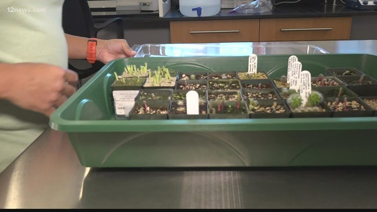 Rare and endangered seed bank looking to keep unique Arizona plants from going extinct