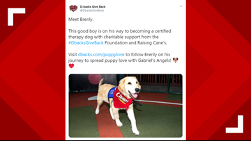 Brenly the Therapy Dog is the latest addition to the D-backs roster