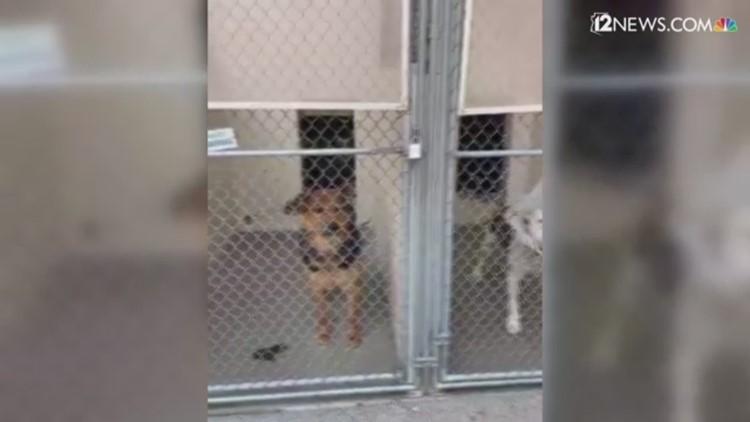 Fin de semana de adopción de mascotas gratis