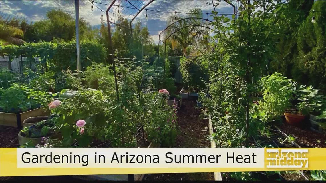 Gardening in the Arizona Summer