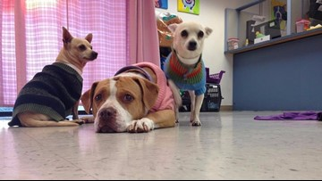 Maricopa County animal shelters taking precautions due to disease outbreaks