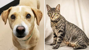 Valley animal rescues cut adoption fees to clear shelters as coronavirus pandemic forces closures
