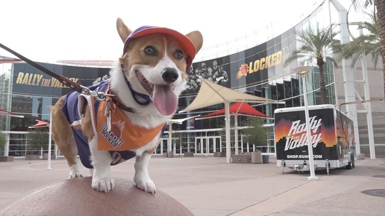 Bacon Booker, the Suns' biggest four-legged fan, leads huge following on Instagram