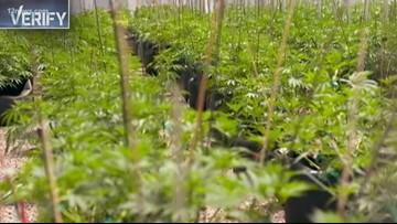 Verify: Will Arizona legalize recreational marijuana?