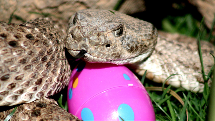 If you're hunting for Easter eggs this weekend, watch out for snakes