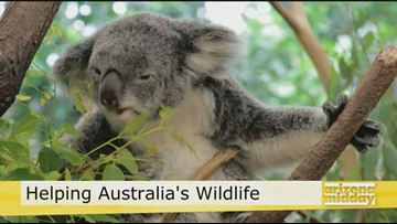 Morris Animal Foundation Helping Australia's Wildlife