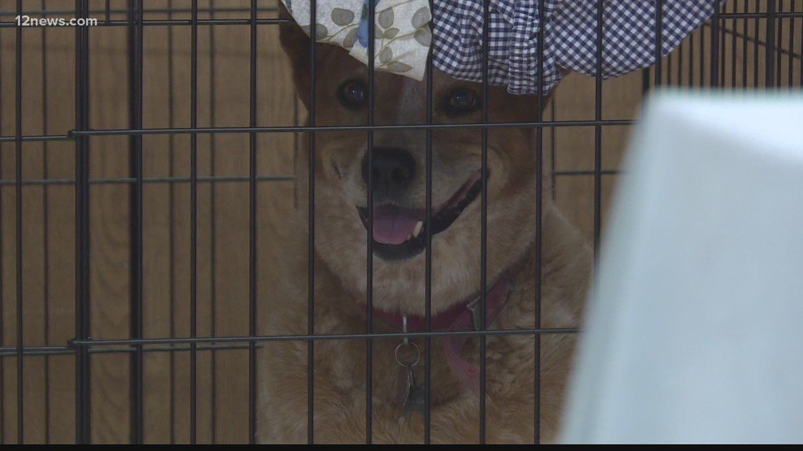 Tips to get your pets ready for Arizona wildfire evacuations