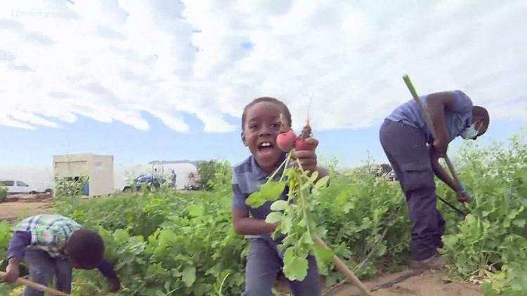 Una granja de Phoenix ayuda a combatir los problemas alimenticios en el Valle
