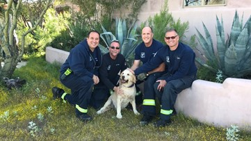 Scottsdale firefighters rescue golden retriever trapped underground