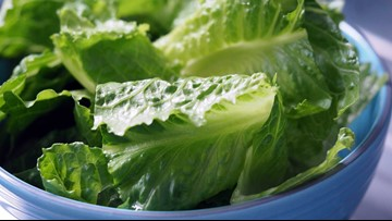 No harmful bacteria in romaine lettuce grown in Yuma, tests find