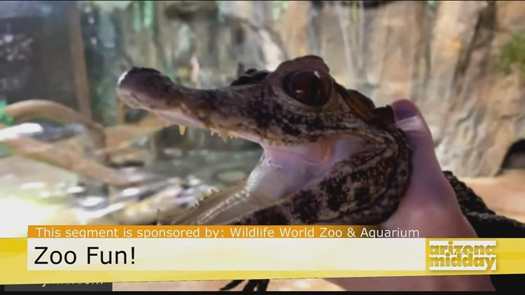 Meet a Cool Croc at the Wildlife World Zoo