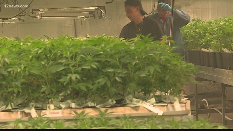Arizonenses con cargos menores de mariguana pueden limpiar su historial criminal