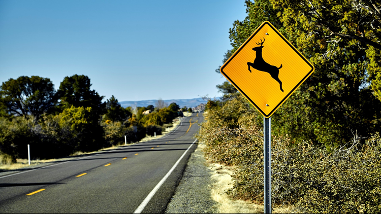 As we head out for our summer road trips, it's important to keep an eye out for wildlife near the roadways.