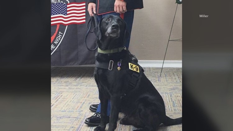 Retired local military dog is finalist for prestigious Hero Dog Award