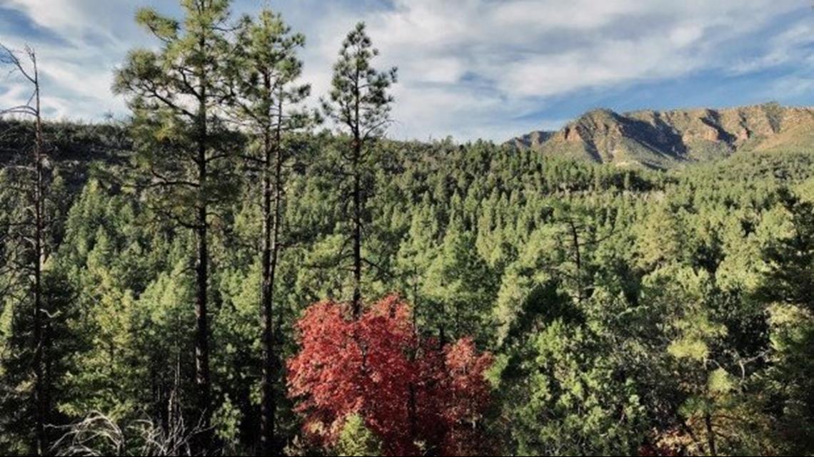 Christmas Tree Permits Arizona 2020 Christmas Tree Cutting Permits Arizona 2020 | Rkudqq.newyearforum.site