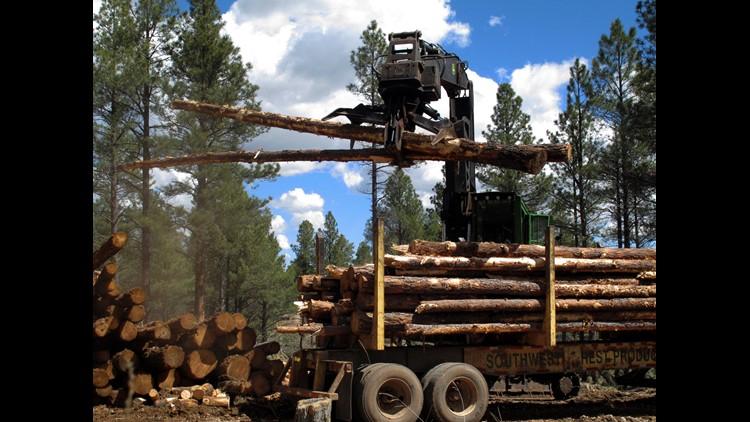 US Forest Service hits brakes on Arizona restoration project