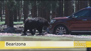 Take A Wild Ride at Bearizona