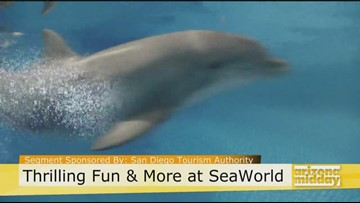 Ride The Tide At SeaWorld!