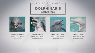 Are dolphins' deaths at Dolphinaris Arizona linked to Valley fever?