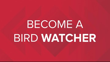 Become a 12 News Bird Watcher! Be a part of our Arizona Cardinals coverage