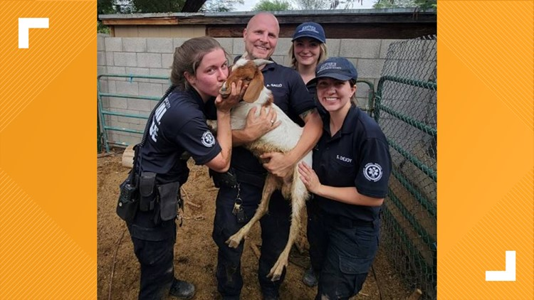 AHS rescues adorable baby goat after it was washed away in monsoon storm
