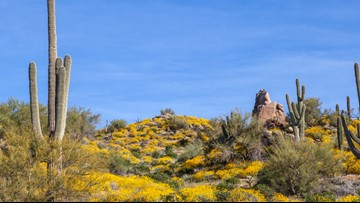 Here's why springtime in Arizona is awesome, according to the internet