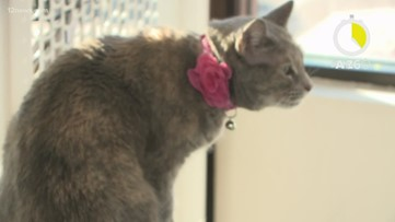 AtoZ60: Cat cafe in the Valley features 'purr-fect' pets up for adoption