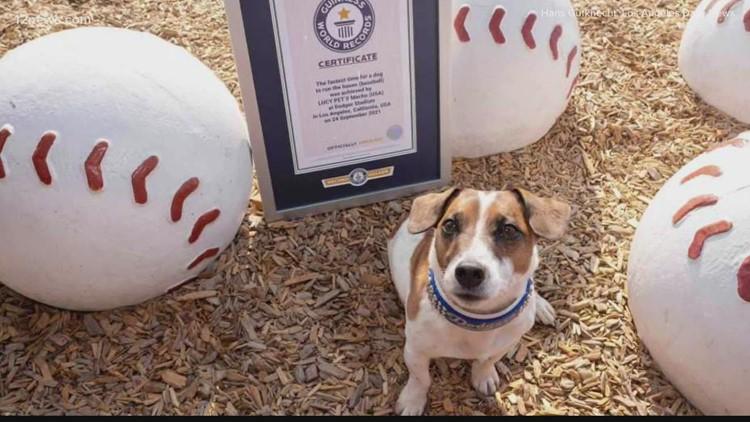 California dog breaks world record for fastest dog to run around all baseball bases
