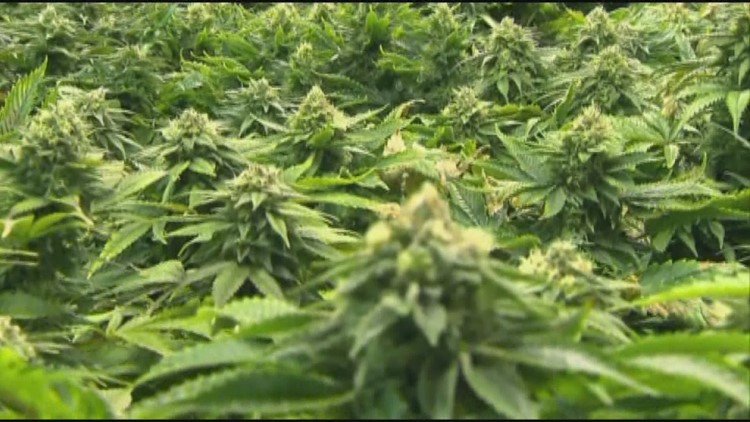 Is Arizona getting ready to legalize marijuana? 4 states to watch in 2020