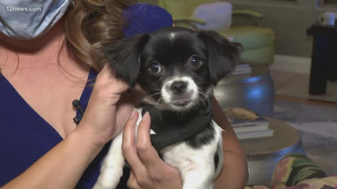 'Cholla Charlie' has found his forever home right here in the Valley
