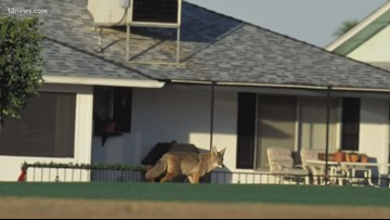 Mother-daughter duo educating neighbors on dangers of feeding coyotes