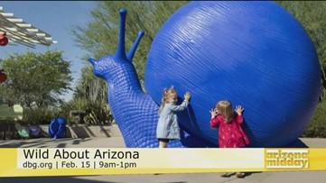 Getting Wild about Arizona at Desert Botanical Garden