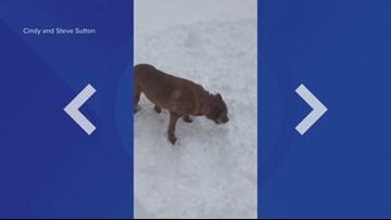 Dog catches snowball
