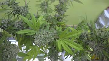 Cannabis flower arrangements are a growing trend