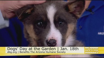 Desert Botanical Garden Dogs' Day!