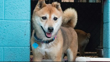 18 dogs rescued from puppy mill preparing for forever families