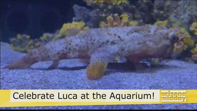 Celebrate Luca at Odysea Aquarium